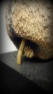 ナマケモノの足