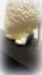 シロクマの足
